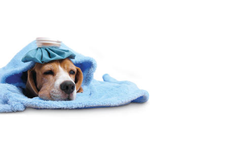 Animal ailments: treating your sick pet