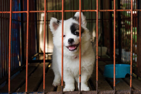 Crate training - Keep your pet safe and comfortable
