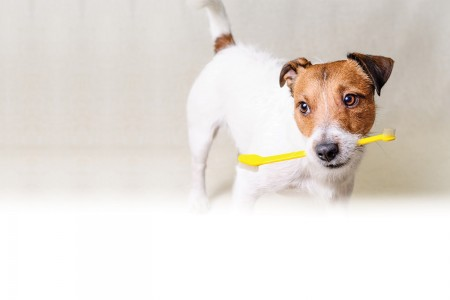 Brushing up on oral care for pets