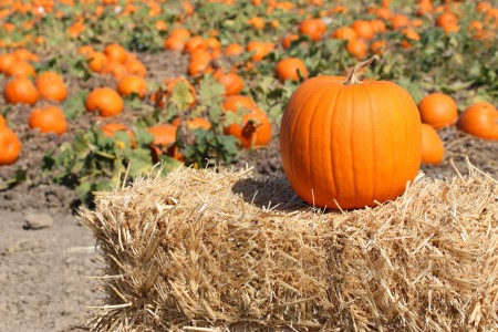 Pick the perfect pumpkin to enjoy it longer this season