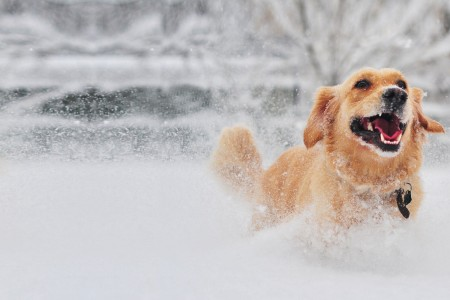 Outdoor dogs in the winter